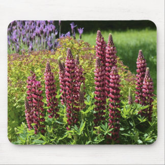 Red lupin flowers mouse pad