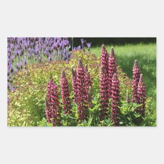 Red lupin flowers rectangular sticker