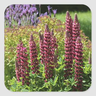 Red lupin flowers square sticker