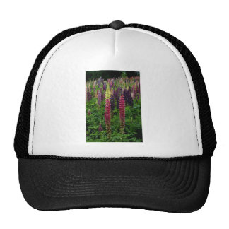 Red Lupins flowers Hats