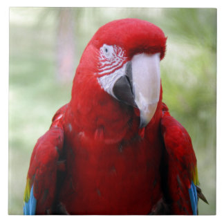 red-macaw10x10 tile