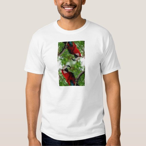 Red Macaw Abstract Tshirt