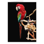 Red Macaw Card for Any Occasion