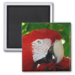 Red Macaw Fridge Magnets