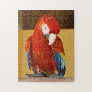 Red Macaw Jigsaw Puzzle
