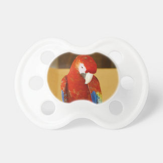 Red Macaw Pacifier