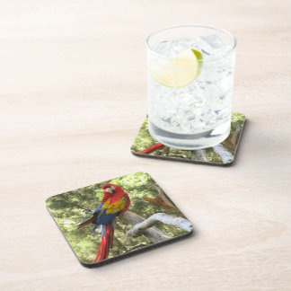 Red Macaw Parrot Beverage Coaster