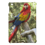 Red Macaw Parrot iPad Mini Cases