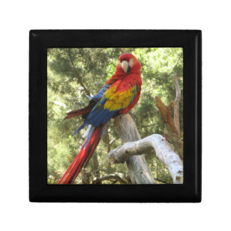 Red Macaw Parrot Jewelry Box