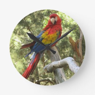Red Macaw Parrot