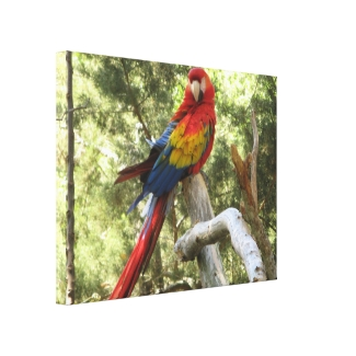 Red Macaw Parrot Wrapped Canvas