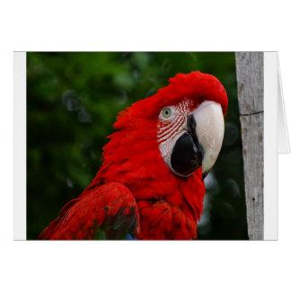 Red Macaw Tarjeta De Felicitación