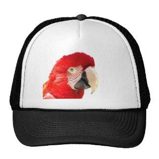 Red macaw trucker hat