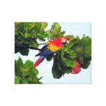 Red Macaw Wall Art Stretched Canvas Print