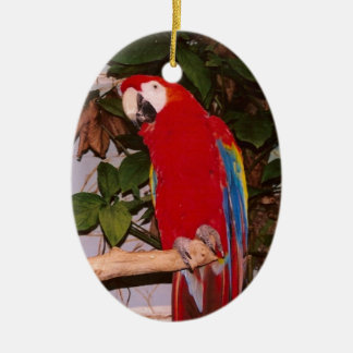 Red Macaw with Leaves Ceramic Ornament