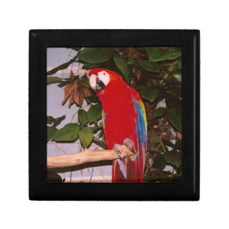 Red Macaw with Leaves Keepsake Box