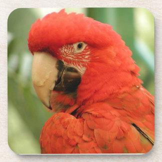 Red Mackaw parrot Beverage Coaster