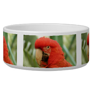 Red Mackaw parrot Bowl