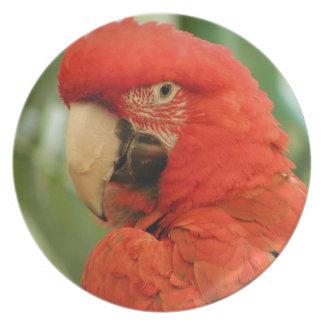 Red Mackaw parrot Dinner Plate