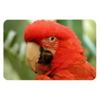 Red Mackaw parrot Magnet