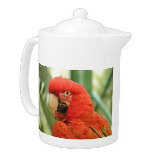Red Mackaw parrot Teapot