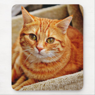 Red Mackerel Tabby Mouse Pad