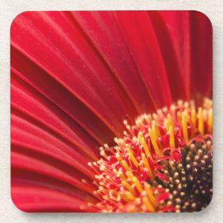 Red Macro Gerbera Daisy Flower Drink Coasters