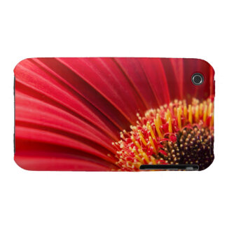 Red Macro Gerbera Daisy Flower iPhone 3 Cases