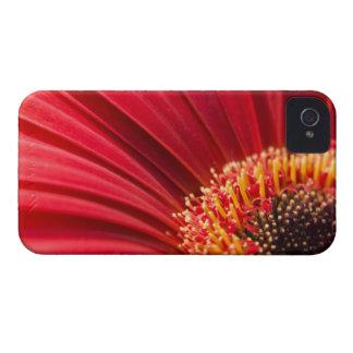 Red Macro Gerbera Daisy Flower iPhone 4 Case-Mate Cases