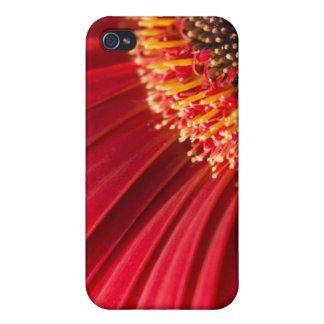 Red Macro Gerbera Daisy Flower iPhone 4 Cover