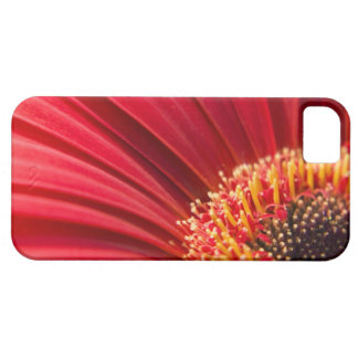 Red Macro Gerbera Daisy Flower iPhone SE/5/5s Case