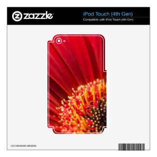 Red Macro Gerbera Daisy Flower iPod Touch 4G Decals