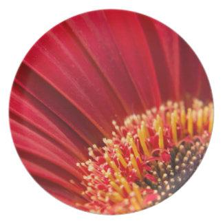 Red Macro Gerbera Daisy Flower Party Plate