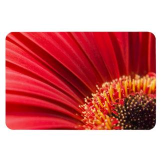 Red Macro Gerbera Daisy Flower Rectangular Photo Magnet