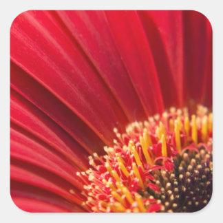 Red Macro Gerbera Daisy Flower Sticker