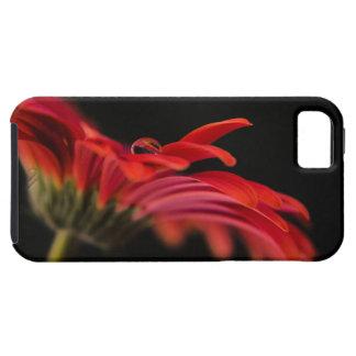 Red Macro Gerbera Flower iPhone SE/5/5s Case