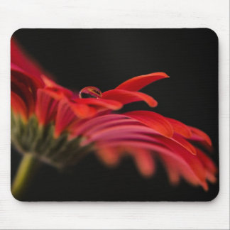 Red Macro Gerbera Flower Mouse Pad