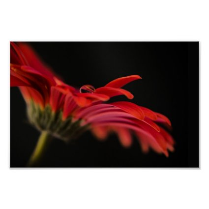 Red Macro Gerbera Flower Poster