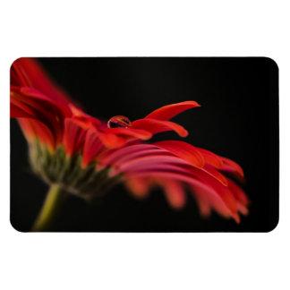 Red Macro Gerbera Flower Rectangular Photo Magnet