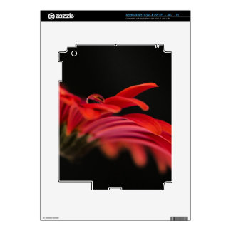 Red Macro Gerbera Flower Skins For iPad 3