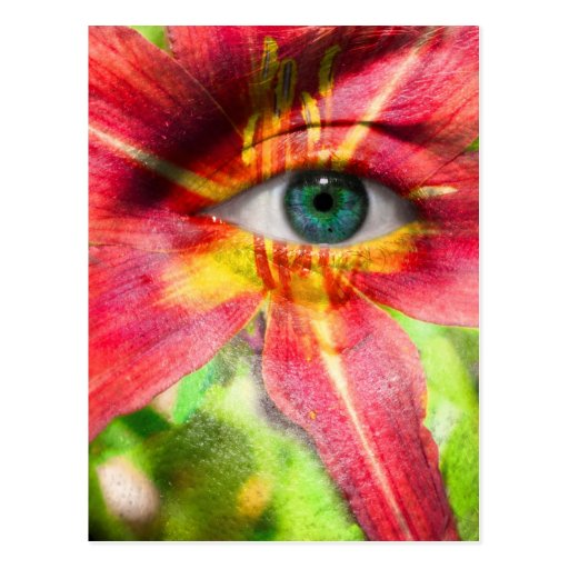 Red Magic Daylily Post Card