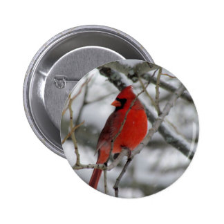 Red male cardinal in the winter 2 inch round button