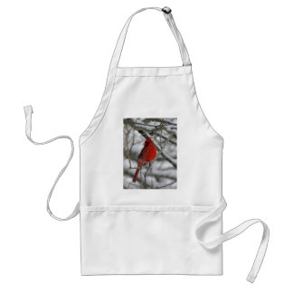 Red male cardinal in the winter adult apron