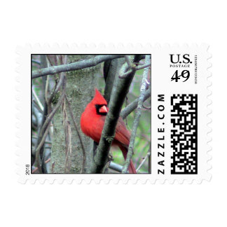Red Male Cardinal side view Stamps