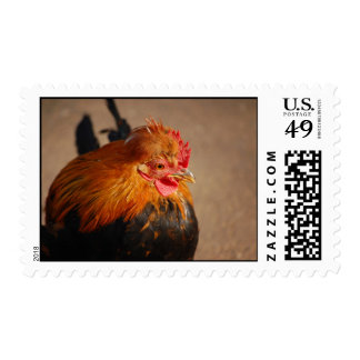 Red-male-chicken1858 ROOSTER FARM ANIMAL BIRD PHOT Postage
