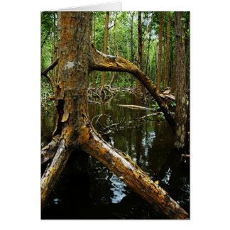 Red Mangrove in the Florida Everglades, 2009 Card