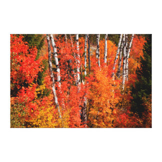 Red Maple (Acer Rubra) And Aspens Canvas Print