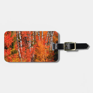 Red Maple (Acer Rubra) And Aspens Tags For Luggage