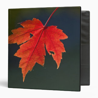 Red Maple Acer rubrum) red leaf in autumn, 3 Ring Binder