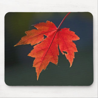 Red Maple Acer rubrum) red leaf in autumn, Mouse Pad